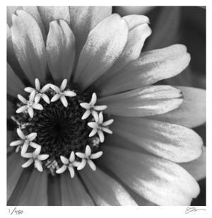 Botanical Study 3 by Stacy Bass