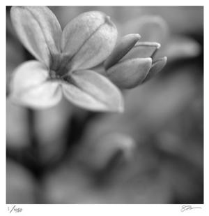 Botanical Study 4 by Stacy Bass