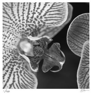 Botanical Study 6 by Stacy Bass