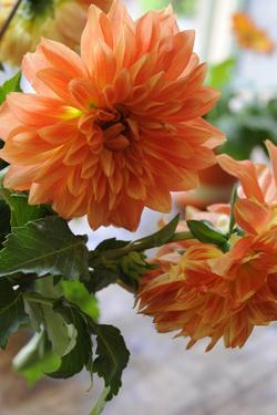 Bright orange flowers on display on kitchen table by Stacy Bass