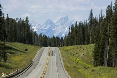 A Highway Leads Through the Forest in Grand Teton National Park by Stacy Gold