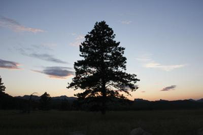 A Tree Silhouetted by the Sunset by Stacy Gold
