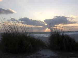 Beach Grass on Anna Maria Island, Holmes Beach, Florida by Stacy Gold