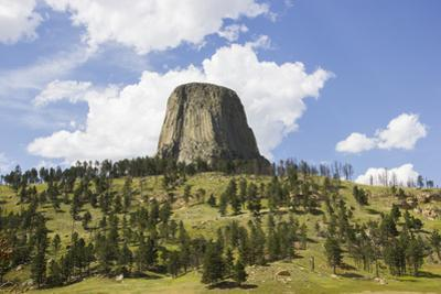 Devil's Tower Rises Above the Tree Lined Landscape Below by Stacy Gold