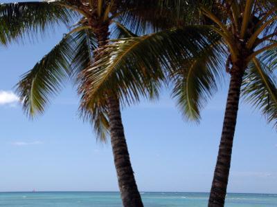 Palm Trees on Waikiki Beach, Hawaii by Stacy Gold
