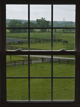 View of a Horse Farm from Inside a Window by Stacy Gold