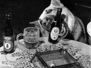 Dog Acts as a Waiter 1965 by Staff