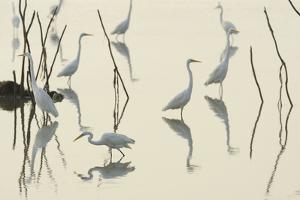 Bird Paddle by Staffan Widstrand