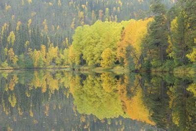 Mirrored Vista
