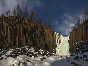 Muskox, male portrait, Dovrefjell National Park, Norway by Staffan Widstrand