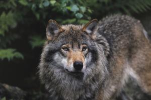 The Wild by Staffan Widstrand
