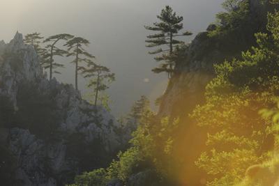 Tree-lined Ridge