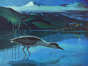 Black Crowned Night Heron by Stan Galli