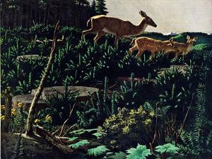Black Tail Deer by Stan Galli