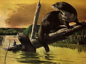 Otters Fear Forest Fire, 1952 by Stan Galli