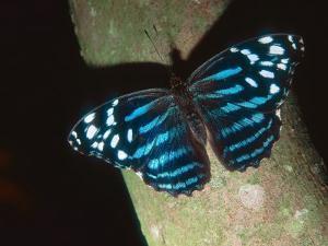 Tropical Blue Wave, Aviary Animal by Stan Osolinski