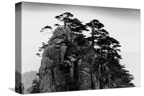 Stange Pines, Huangshan, China--Stretched Canvas Print