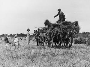 Three Children Helping Their Farmer Father to Bring in the Hay by Horse and Cart by Staniland Pugh