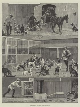 Sketches at the Dogs' Home, Battersea by Stanley Berkeley