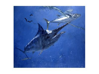 Black Marlin, Two Dogtooth Tuna and Needlefish by Stanley Meltzoff