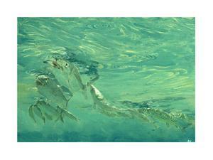 Bonefish Bibblin' in De Drougey Water, 1988 by Stanley Meltzoff