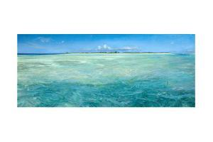 Bones Up with the Tide: a Panoramic Island View of Bonefish Searching for Food in Shallow Water by Stanley Meltzoff