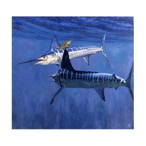 Two Striped Marlin and Turtle by Stanley Meltzoff