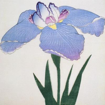 Kaku Jaku Ro Book of a Blue Iris by Stapleton Collection