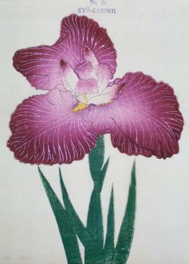 Kyo-Kanoko Book of a Dark Pink Iris by Stapleton Collection