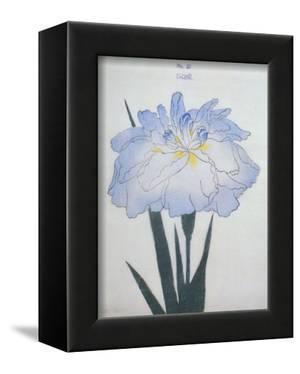 U-Chu Book of a Light Blue Iris by Stapleton Collection