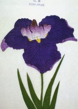 Yedo-Jiman Book of a Purple Iris by Stapleton Collection