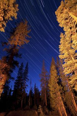 Star Trails Above Campfire Lit Pine Trees in Lassen Volcanic National Park