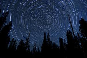 Star Trails and a Meteor Above Pine Trees in Lassen Volcanic National Park