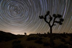 Star Trails and Joshua Trees in Joshua Tree National Park, California