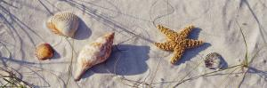 Starfish and Seashells on the Beach, Dauphin Island, Alabama, USA