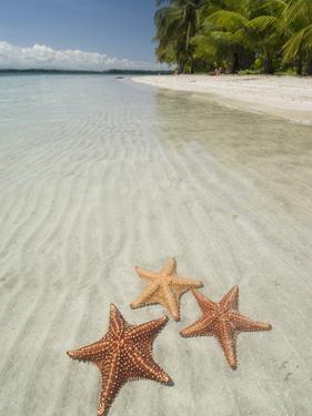 Starfish Beach, Bocas Del Drago, Isla Colon, Bocas Del Toro, Panama, Central America