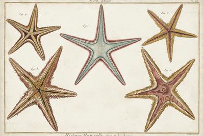 https://imgc.allpostersimages.com/img/posters/starfish-naturelle-i_u-L-Q1AOVU20.jpg?artPerspective=n