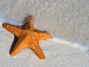 Starfish on Shore