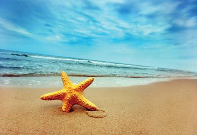 Starfish On The Beach - Best For Web Use