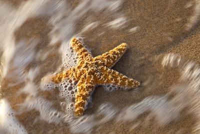 https://imgc.allpostersimages.com/img/posters/starfish-on-the-sandy-beachs-of-keihi-maui-hawaii-in-the-evening-light_u-L-PZNVZA0.jpg?p=0