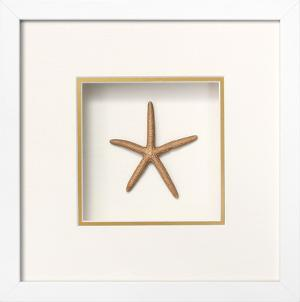 Starfish Shadowbox - Gold