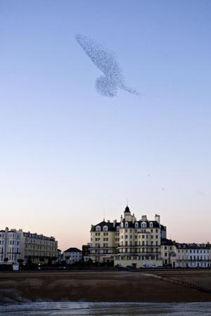 Starlings Shape Above Urban Building
