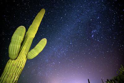 https://imgc.allpostersimages.com/img/posters/stary-sky-with-saguaro-cactus-over-organ-pipe-cactus-nm-arizona_u-L-PU3FK20.jpg?p=0