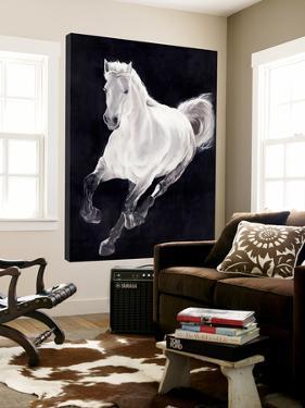 White Horse by Stefano Altamura
