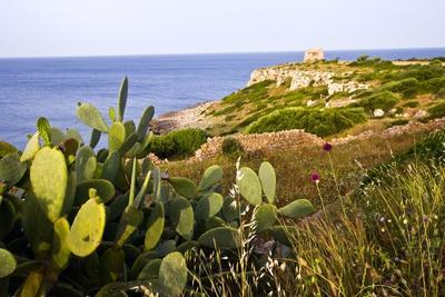 Sea Coast with Cactus, Parco Naturale Di Porto Selvaggio, Torre Uluzzo E Baia, Nardo, Italy