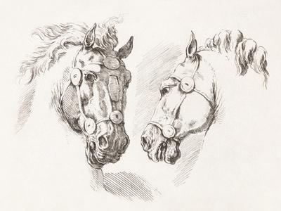 Equus Study
