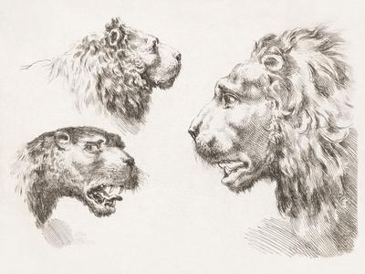 Magna Feles Study