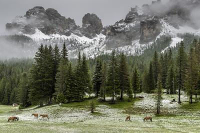 Horses Grazing in the Meadow Blanketed in Summer Snow, Dolomites, Alto Adige or South Tyrol, Italy by Stefano Politi Markovina