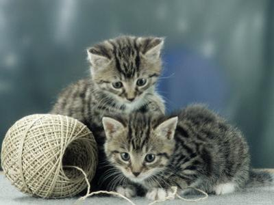 Kittens at Play by Steimer