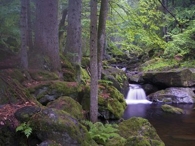 https://imgc.allpostersimages.com/img/posters/steinklamm-rainforest-the-bavarian-forest-big-ohe-spiegelau-bavaria-germany_u-L-Q1EXYML0.jpg?artPerspective=n